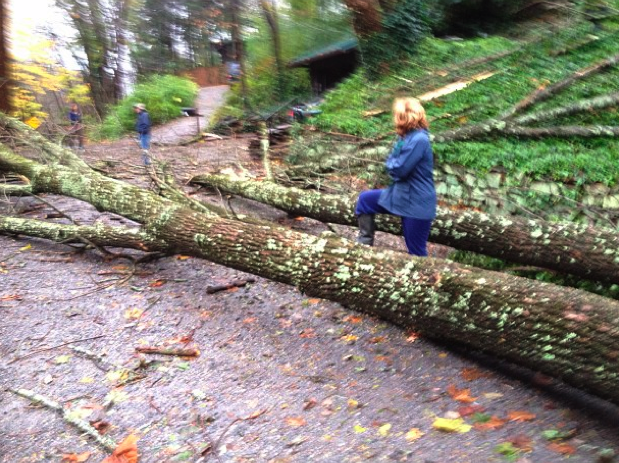 Sandy storm damage in Bucks County, Pa. Photo courtesy Leah Ingram.
